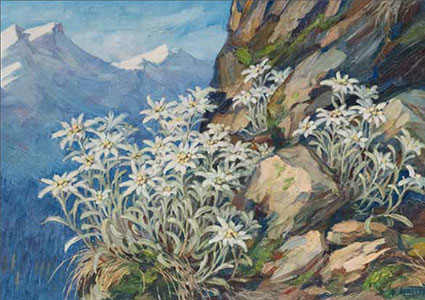 AH 7  «Edelweiss»