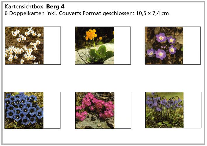 Berg4 «Bergblumen»
