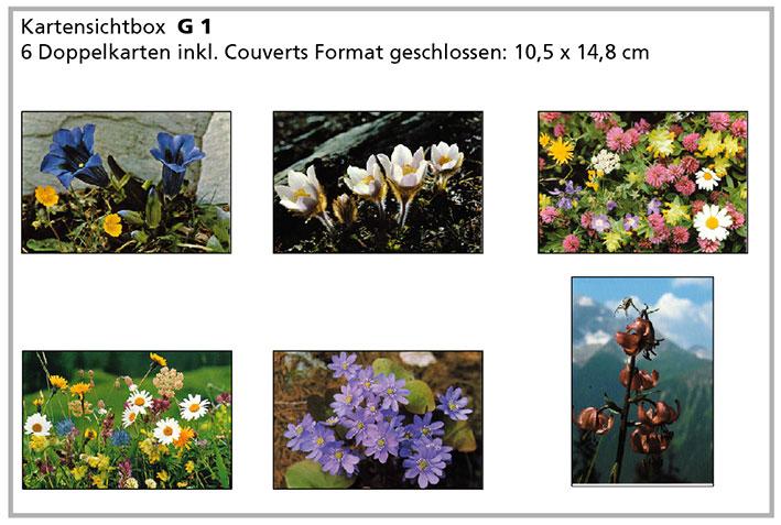 G1 «Alpenblumen»