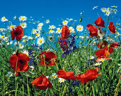 Rd 19 «Wiesenblumen»