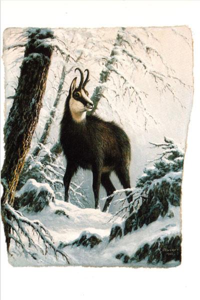 Me 4 «Gemsbock im Winterkleid»